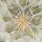Seedhead